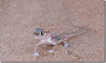 Gecko IMG_4252