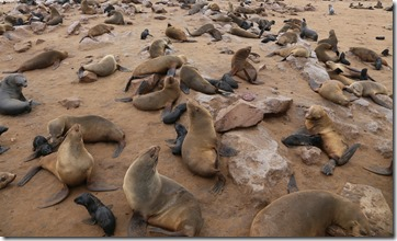 Seal colony IMG_4186